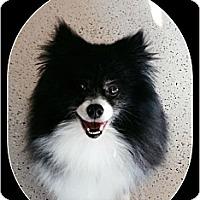 Adopt A Pet :: Truffle - Harrisburg, PA