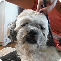 Adopt A Pet :: MaX @ Petsmart Sat. 11-5 - Atascadero, CA