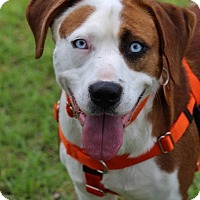 Adopt A Pet :: Randy - Pinehurst, NC
