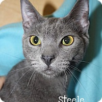 Adopt A Pet :: Steele - Foothill Ranch, CA