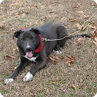Adopt A Pet :: Jhett - Oakland, AR