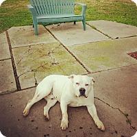 Adopt A Pet :: Charlie - Livermore, CA