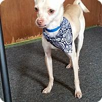 Adopt A Pet :: Alvin - Tavares, FL