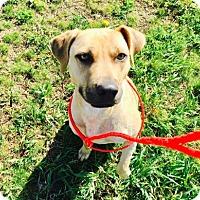 Adopt A Pet :: Melvin - Spokane, WA