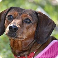 Adopt A Pet :: April - Wimberley, TX