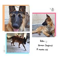 Adopt A Pet :: ROBIN - Los Angeles, CA