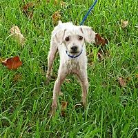 Adopt A Pet :: OLAF - Houston, TX
