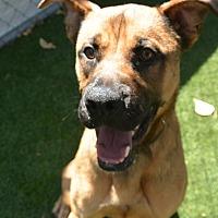 Adopt A Pet :: Kip - Meridian, ID