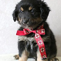 Adopt A Pet :: Bruno - Brooklyn Center, MN