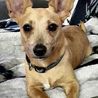 Adopt A Pet :: Chip - Bradenton, FL