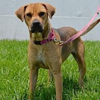 Adopt A Pet :: IZZY - West Palm Beach, FL