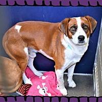 Adopt A Pet :: Shep male X - San Jacinto, CA