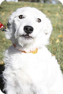 Terrier (Unknown Type, Small) Mix Puppy for adoption in Broomfield, Colorado - Bonnie