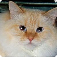 Adopt A Pet :: Gremlin - Centerburg, OH