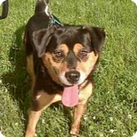 Adopt A Pet :: Rip - Dayton, OH