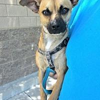Adopt A Pet :: Buddy - Fresno, CA