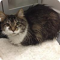 Adopt A Pet :: Glinda - Chicago, IL