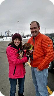 Dachshund Mix Dog for adoption in Northville, Michigan - Amelia-ADOPTED