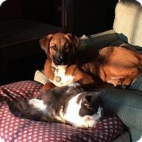 Adopt A Pet :: Finley - Adopted! - Croydon, NH