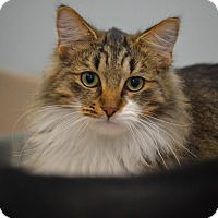Adopt A Pet :: Terrence - Byron Center, MI