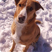 Adopt A Pet :: Trixie - Caledon, ON