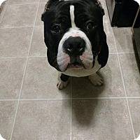 Adopt A Pet :: Chewy - Davison, MI