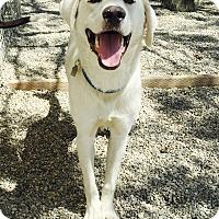 Adopt A Pet :: Bear5 - Los Angeles, CA