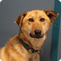 Adopt A Pet :: Hotshot - North Pole, AK