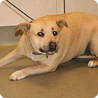 Adopt A Pet :: Lexi - Wildomar, CA