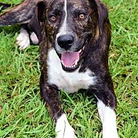 Adopt A Pet :: Maui - thibodaux, LA
