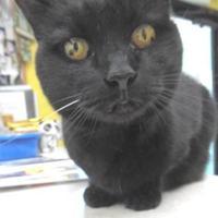 Adopt A Pet :: Lavender - Waupaca, WI