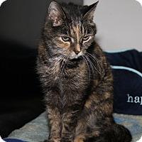 Adopt A Pet :: Minnie Pearl (Update) - Marietta, OH