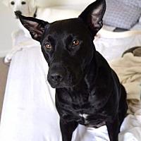 Adopt A Pet :: Lil' Bit - Melrose, FL