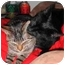 Photo 2 - Domestic Shorthair Cat for adoption in Proctor, Minnesota - Boomerang