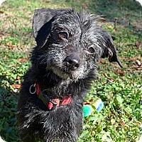 Adopt A Pet :: Josie - Mocksville, NC