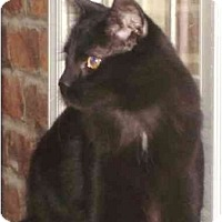 Adopt A Pet :: Loki - Chesapeake, VA