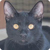 Adopt A Pet :: BB (Beautiful Boy) - San Rafael, CA
