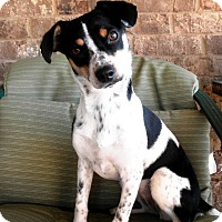 Adopt A Pet :: Zoomie - Knoxville, TN
