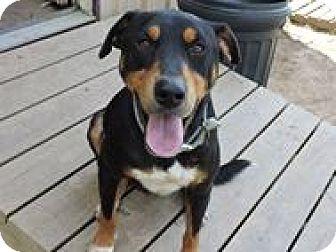 Labrador Retriever/Retriever (Unknown Type) Mix Dog for adoption in Cottonport, Louisiana - Sammy