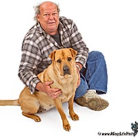 Adopt A Pet :: Copper - Gilbert, AZ