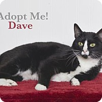 Adopt A Pet :: Dave - West Des Moines, IA