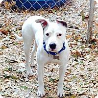 Adopt A Pet :: Super cute Gracie - Los Angeles, CA
