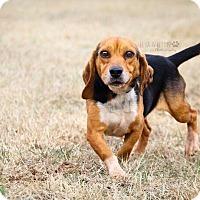 Adopt A Pet :: Branson - Cashiers, NC