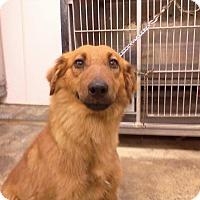 Adopt A Pet :: Jane - Upper Sandusky, OH