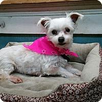 Adopt A Pet :: Aspen - Crump, TN