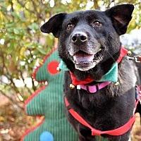 Adopt A Pet :: Nikki - Summerville, SC