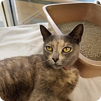 Adopt A Pet :: Butter - Gaithersburg, MD