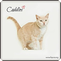 Adopt A Pet :: Cuddles - Troy, VA