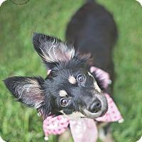 Adopt A Pet :: BubblePop - Kingwood, TX