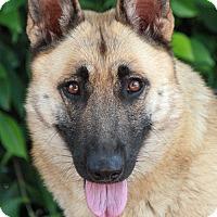 Adopt A Pet :: Clementine von Calau - Los Angeles, CA